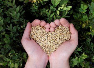 איך לחיות במאה ה 21 ולהימנע ממזון מתועש? סודות הליקוט